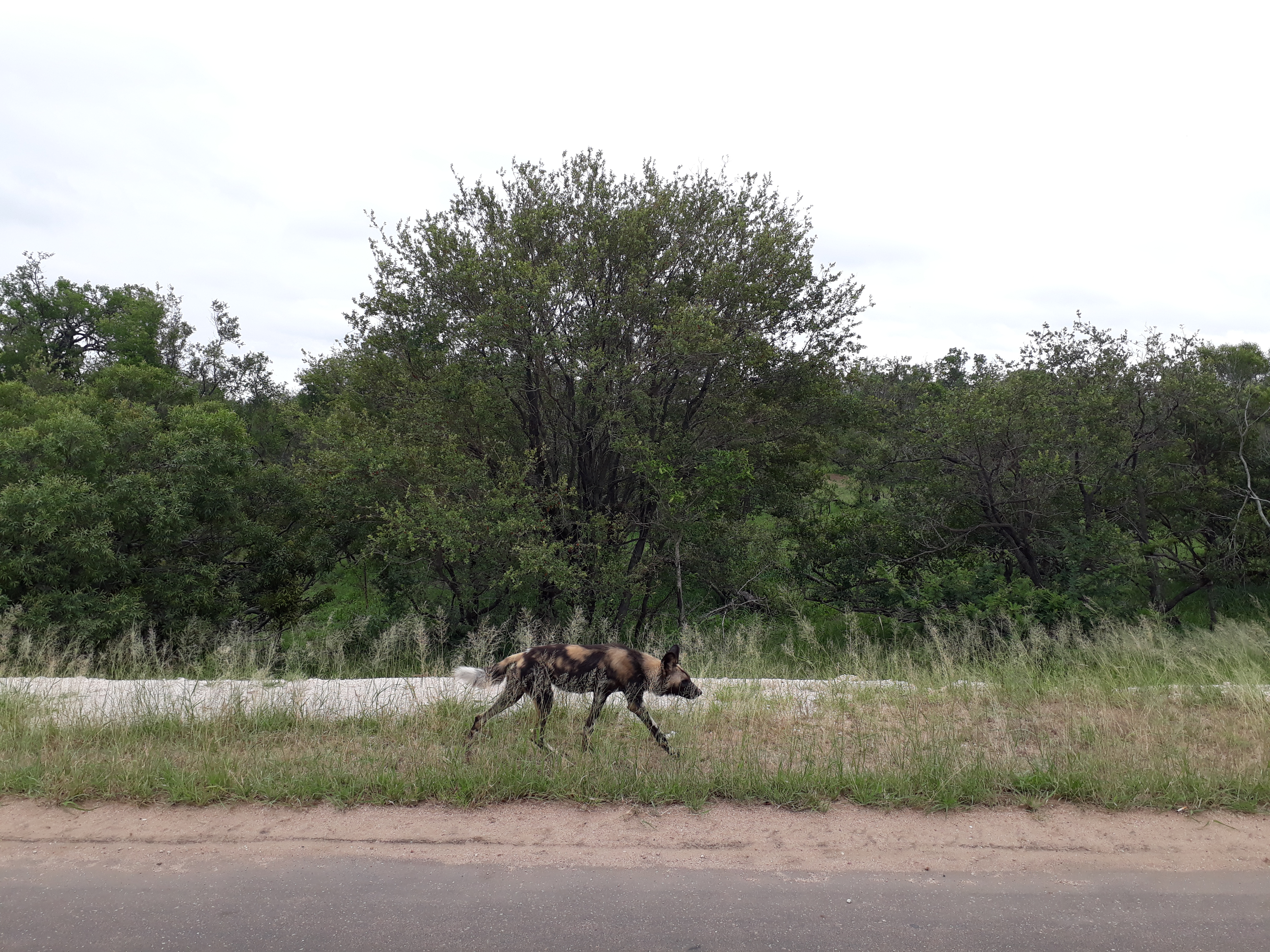 Kruger National Park Wildlife