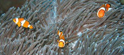 Ocean Life South Africa